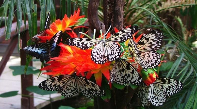 casa-farfalle.jpg
