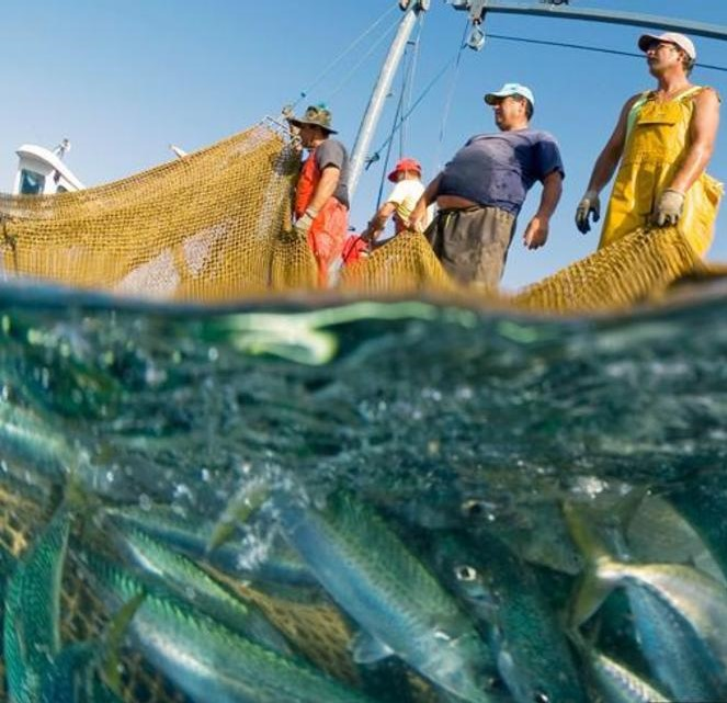 pesca-elettrica.jpg