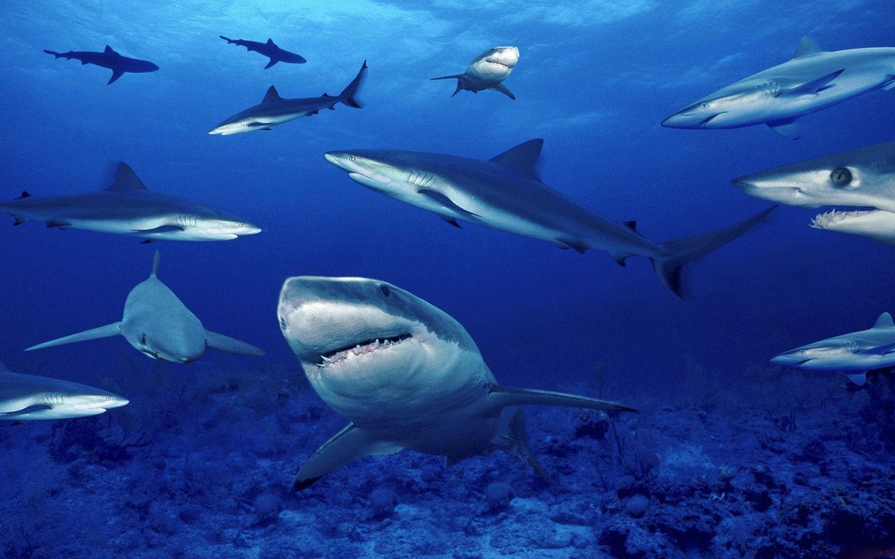 squali.jpg