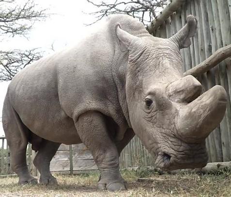 rinoceronte-bianco.jpg
