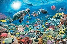 ambiente-marino.jpg