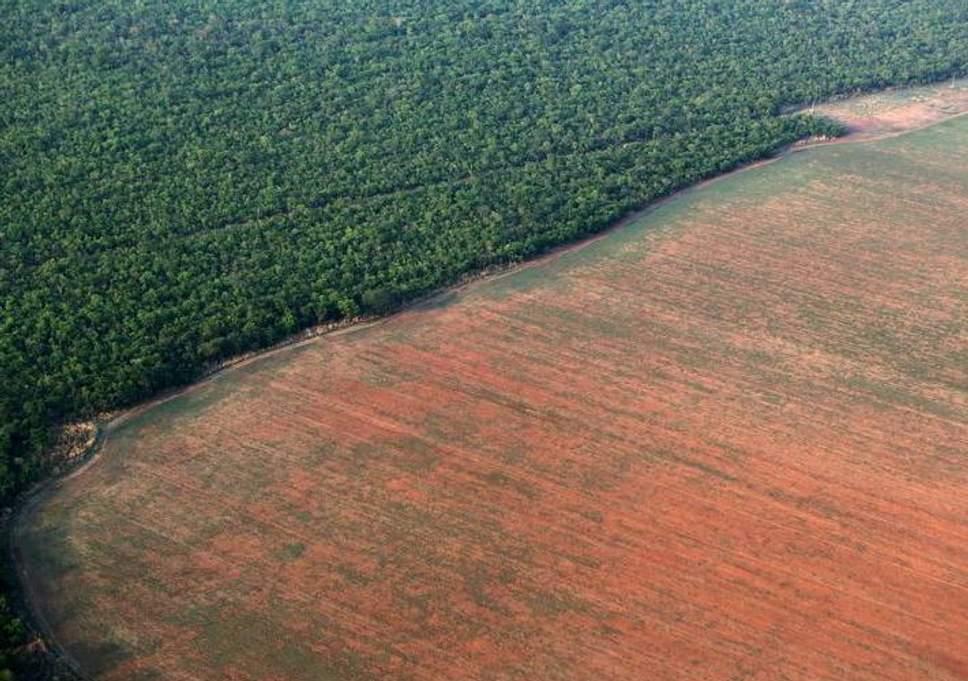 deforestazione-brasile.jpg