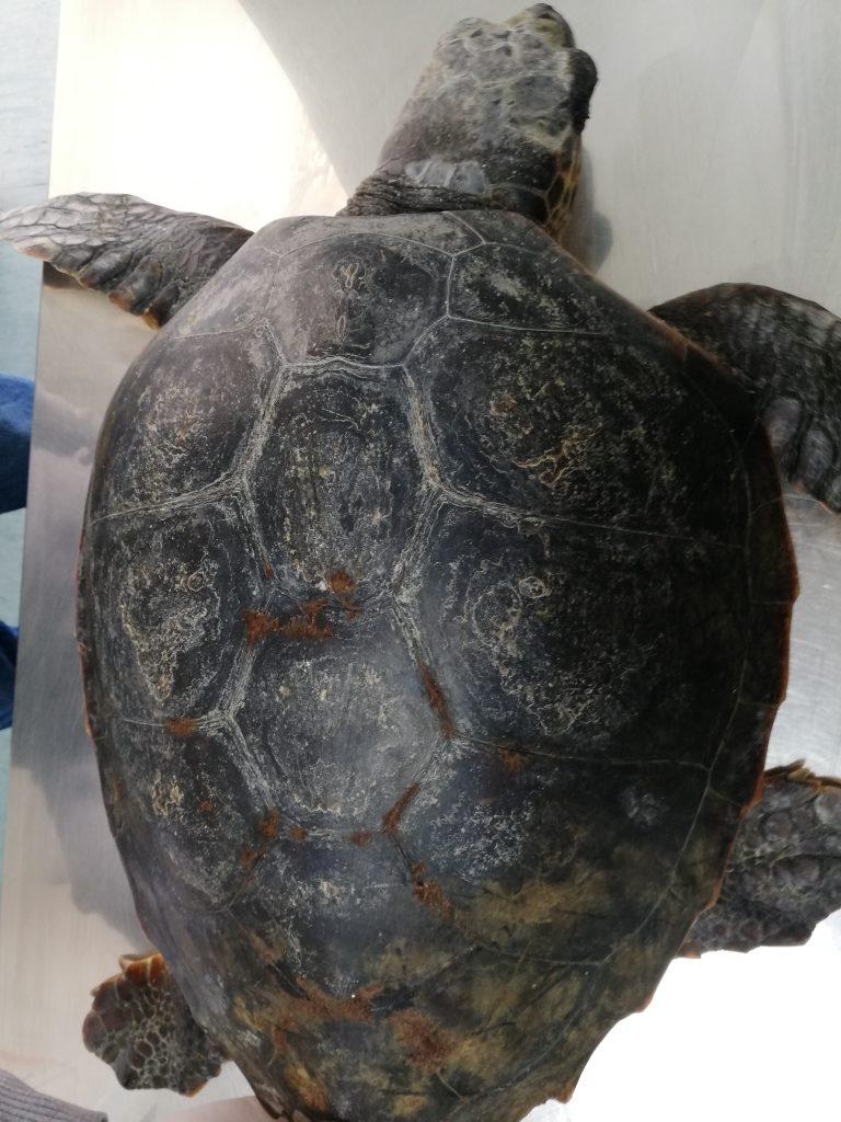 tartaruga-salvata.jpg