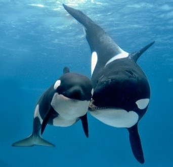 orche.jpg