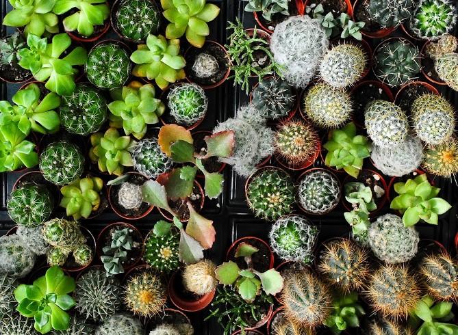 biodiversita.jpg
