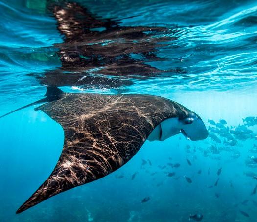 oceani-greenpeace.jpg