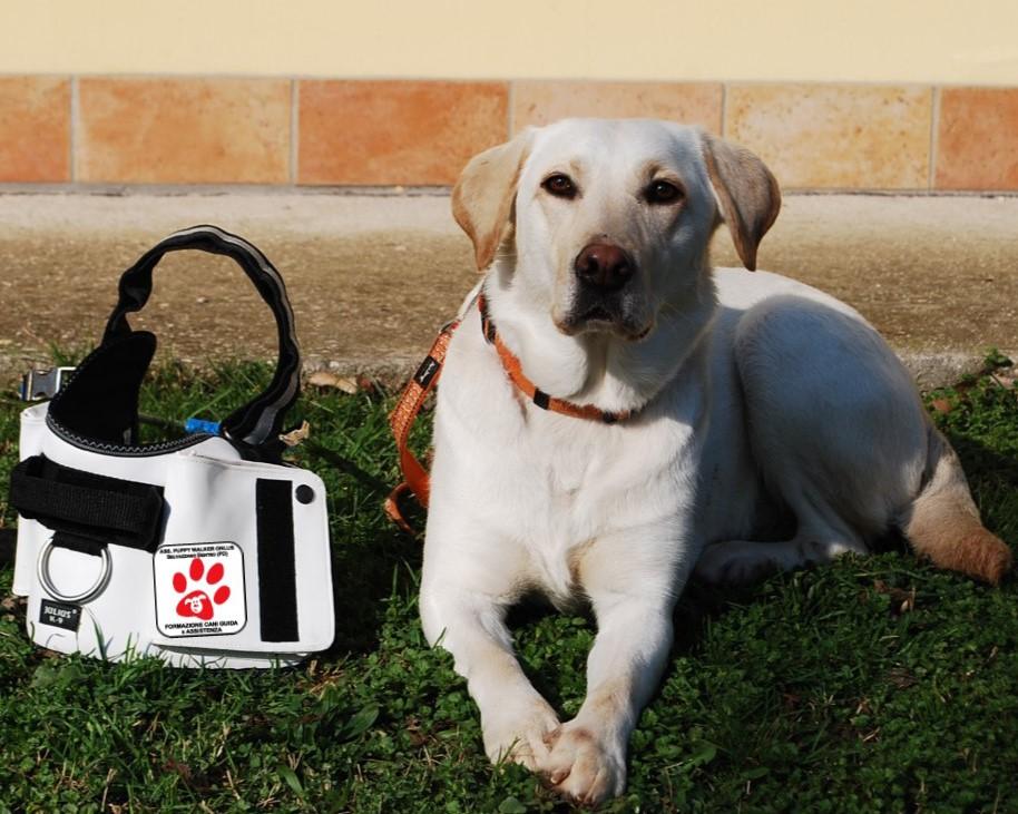 guida-puppy.jpg