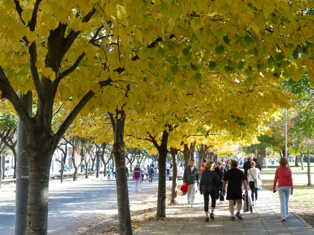 alberi-citta.jpg