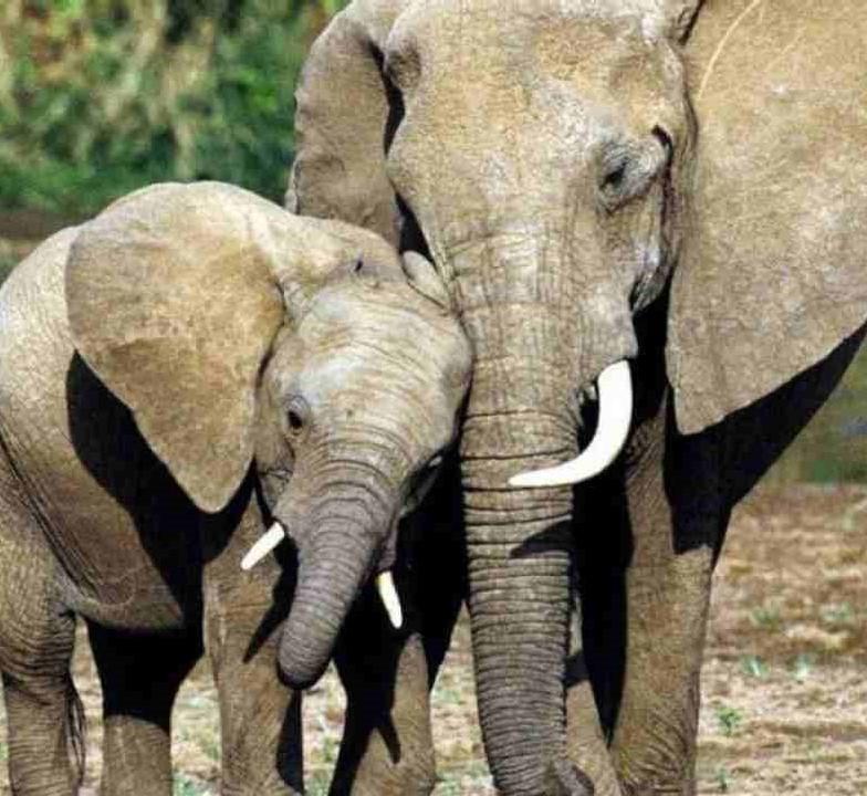 elefante1-compressed.jpg