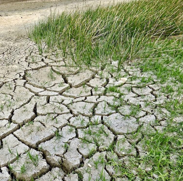 adattamento-cambiamenti-climatici.jpg