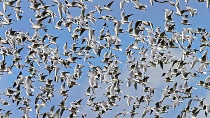 stormo-uccelli.jpg