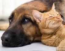 cane-gatto.jpg