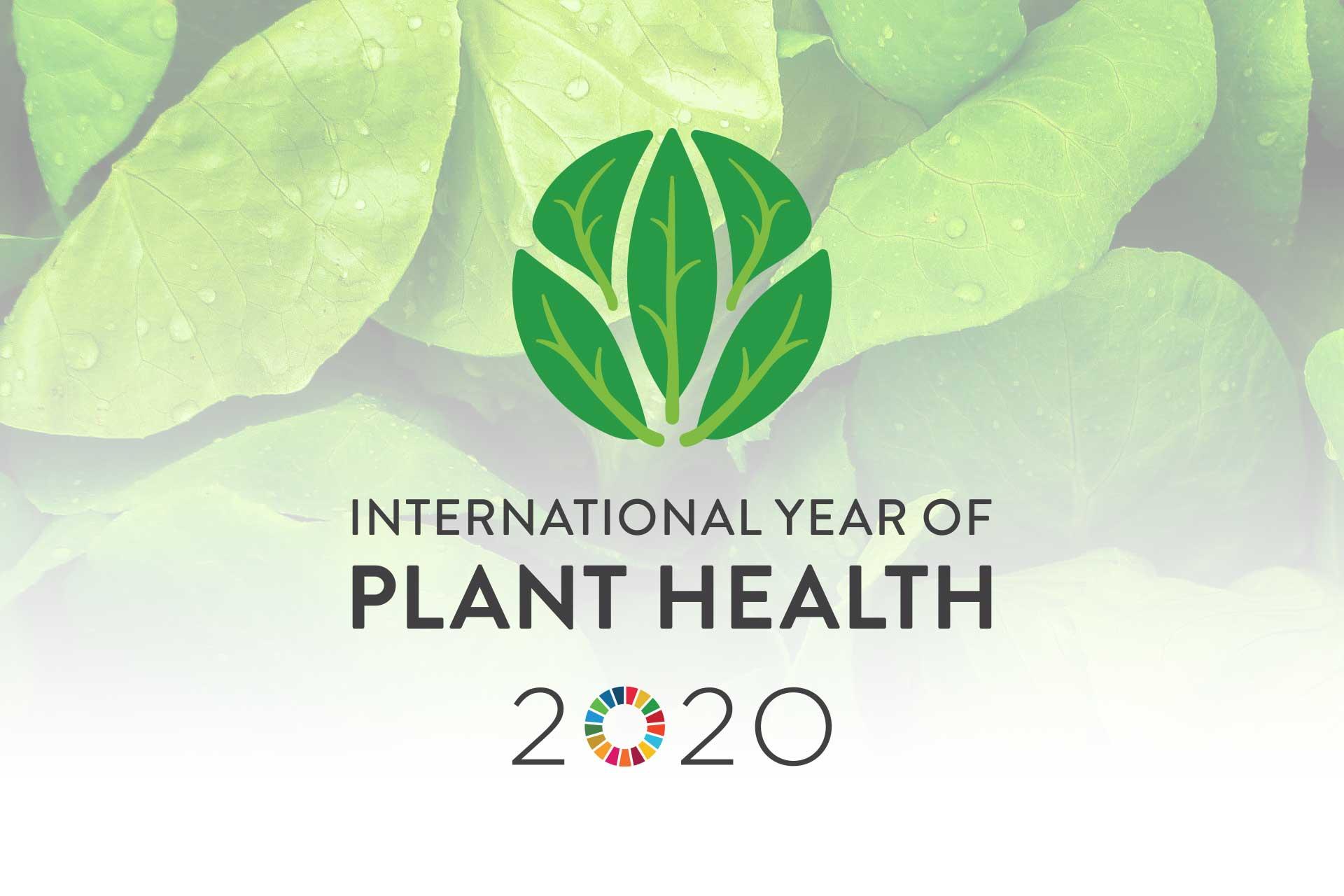 anno-piante.jpg