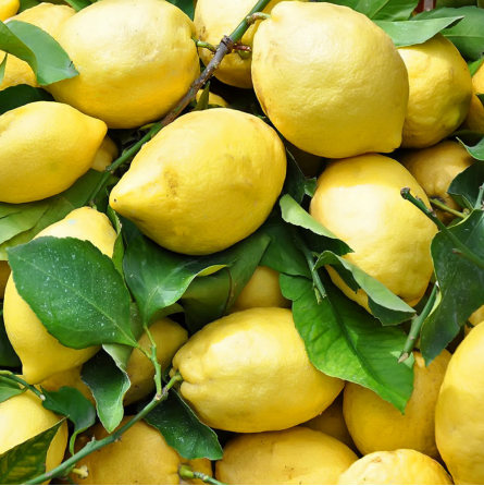 cassetta-limoni.jpg