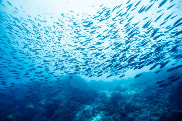 pesca-sostenibile.jpg