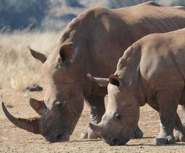 sudafrica-rinoceronte.jpg