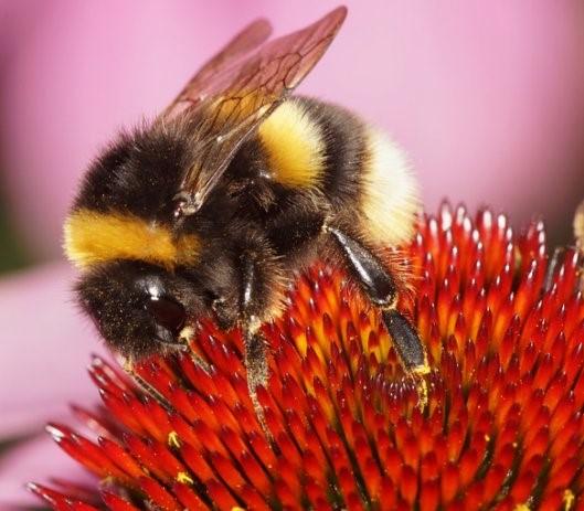 insetti-impollinatori.jpg