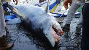 squalo-catania.jpeg