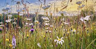 biodiversita_0.jpg