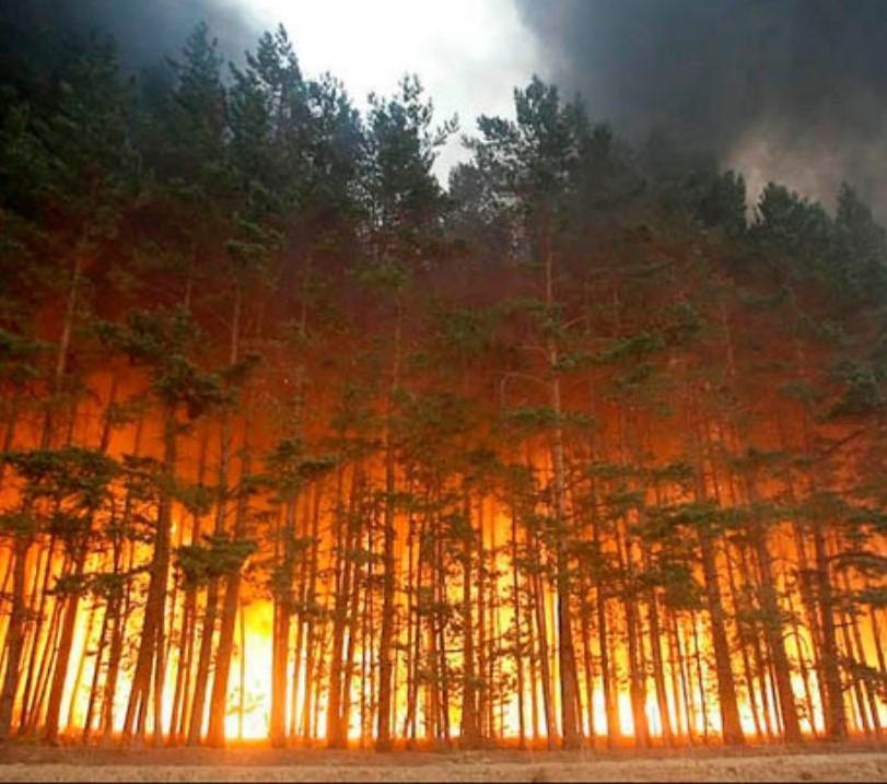 incendi-siberia.jpg