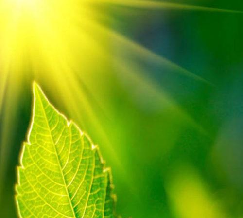 fotosintesi-clorofilliana.jpg