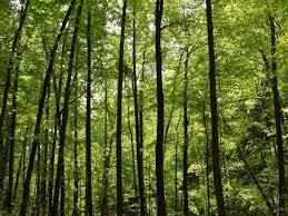 foreste.jpg