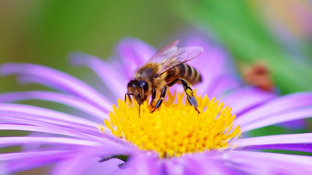 ape-fiore.jpg
