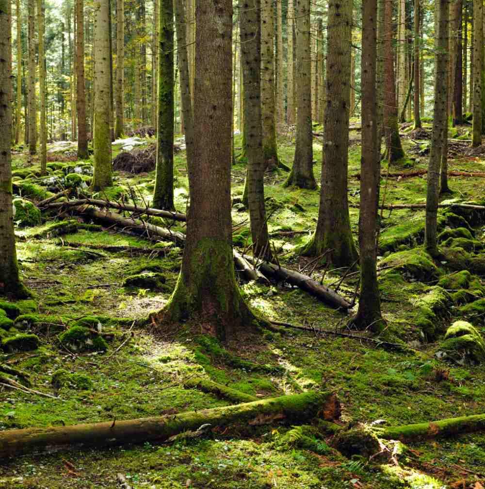 piantumazione-alberi-eon.jpg
