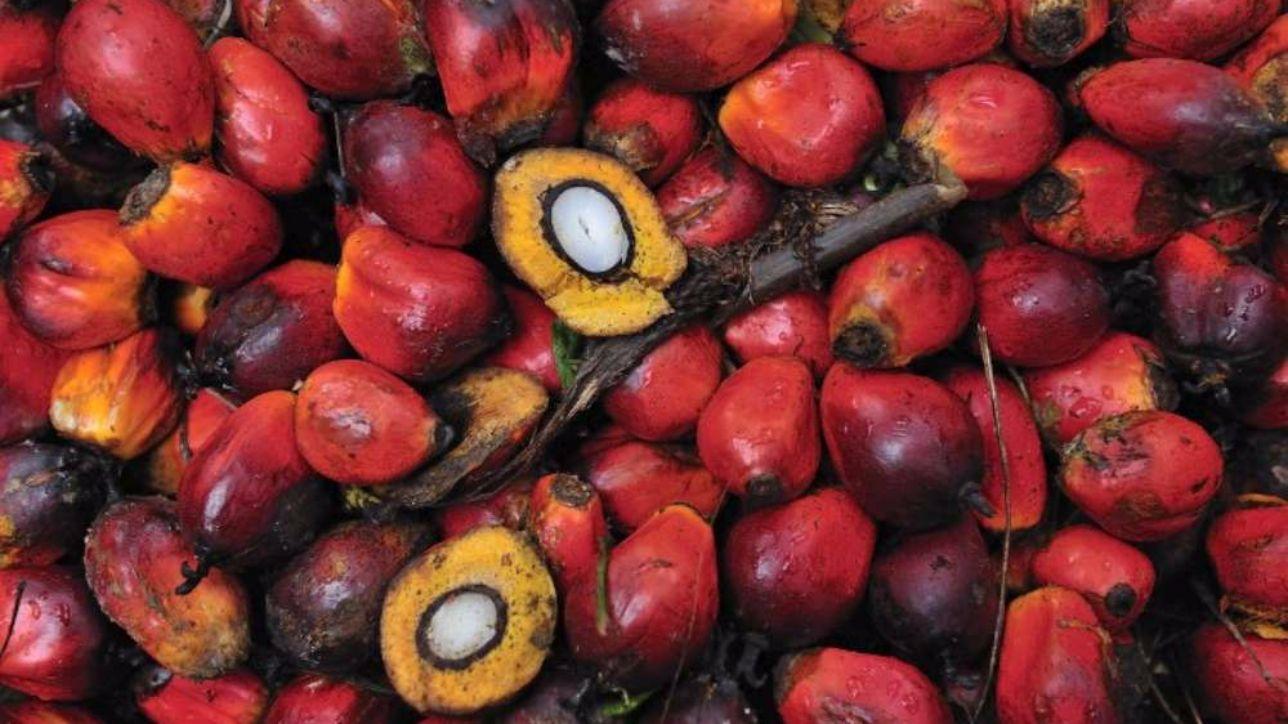 olio-palma.jpg