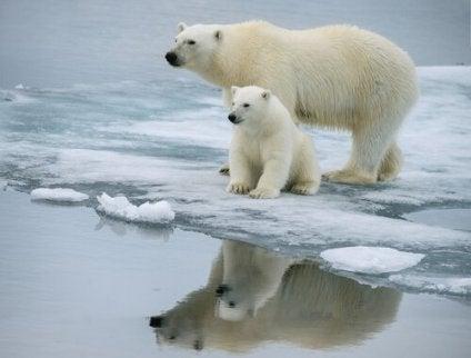 orsi-iceberg.jpg