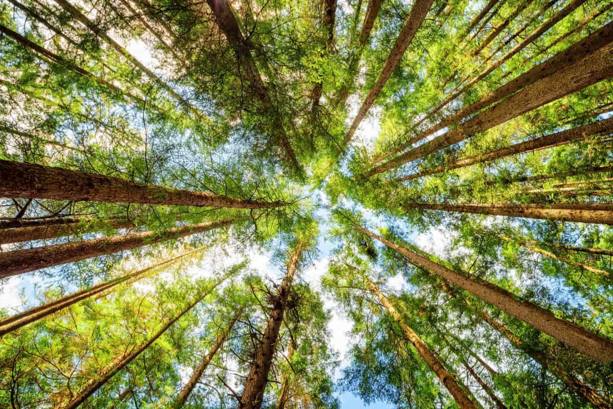 alberi_0.jpg