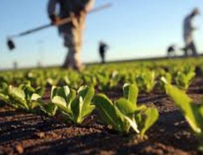 agricoltura-biologica_0.png