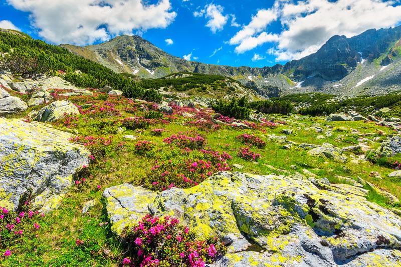 piante-alpine.jpg