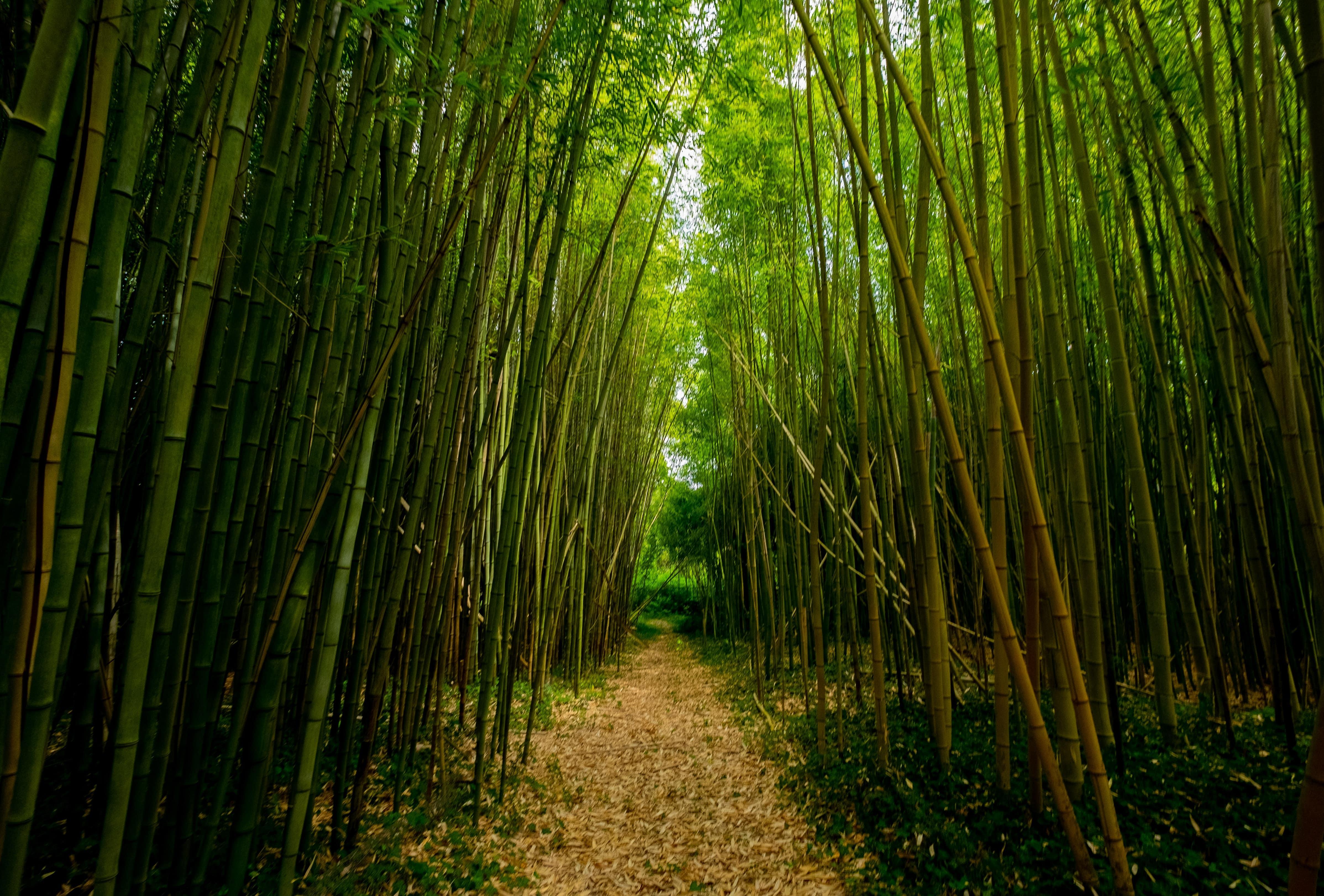 ben-guerin-bambu.jpg