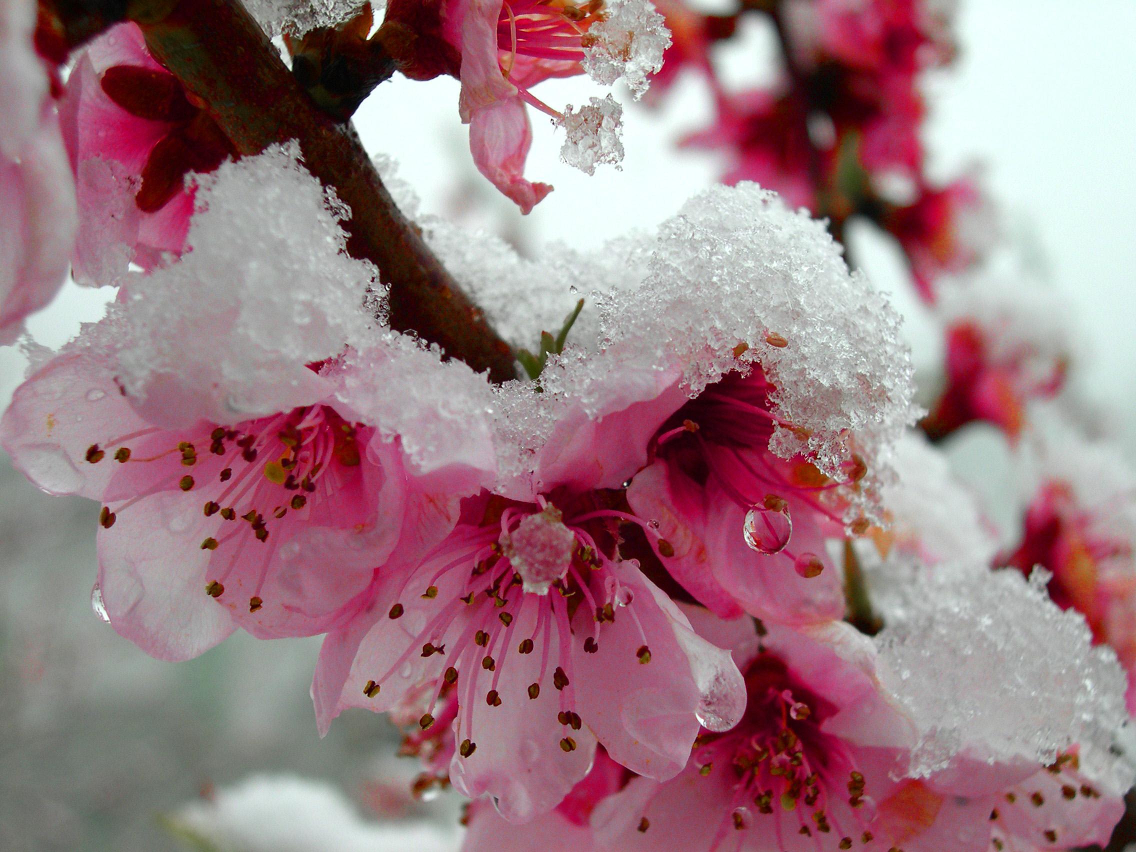 aprile-freddo.jpg