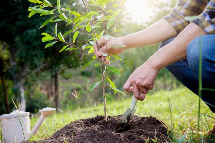 come-piantare-albero.jpeg