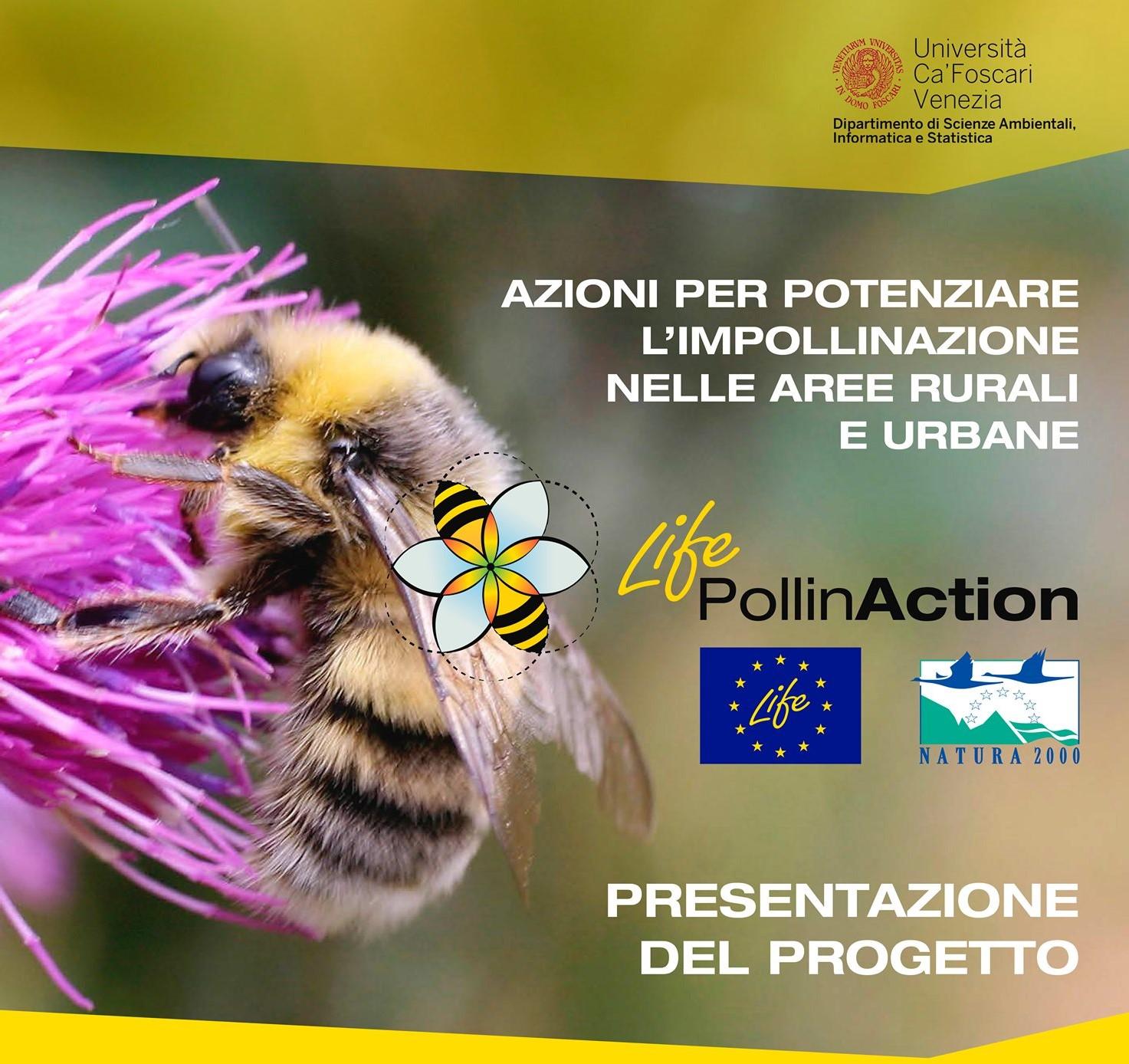 pollinaction.jpg